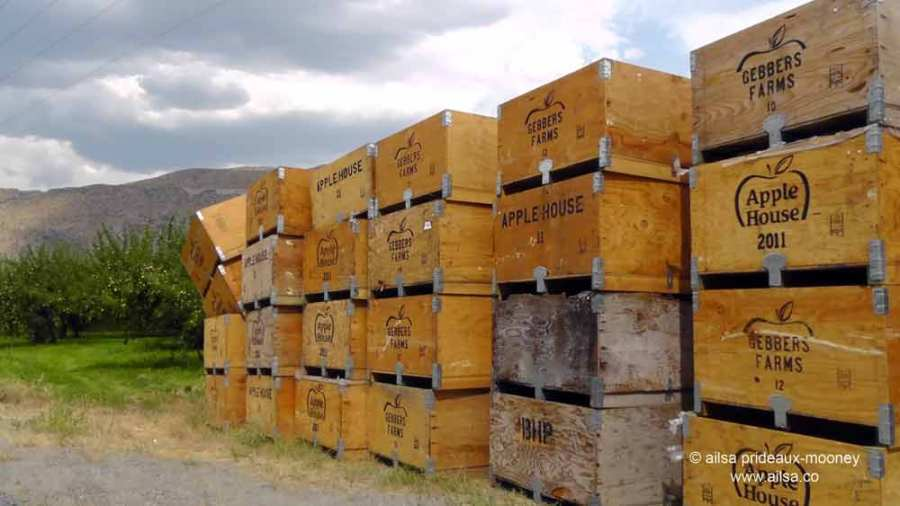 methow valley, agriculture, fertile valley, north cascades loop, leavenworth, washington, Stevens Pass, travel, travelogue, Ailsa Prideaux-Mooney, orchards, apple crates