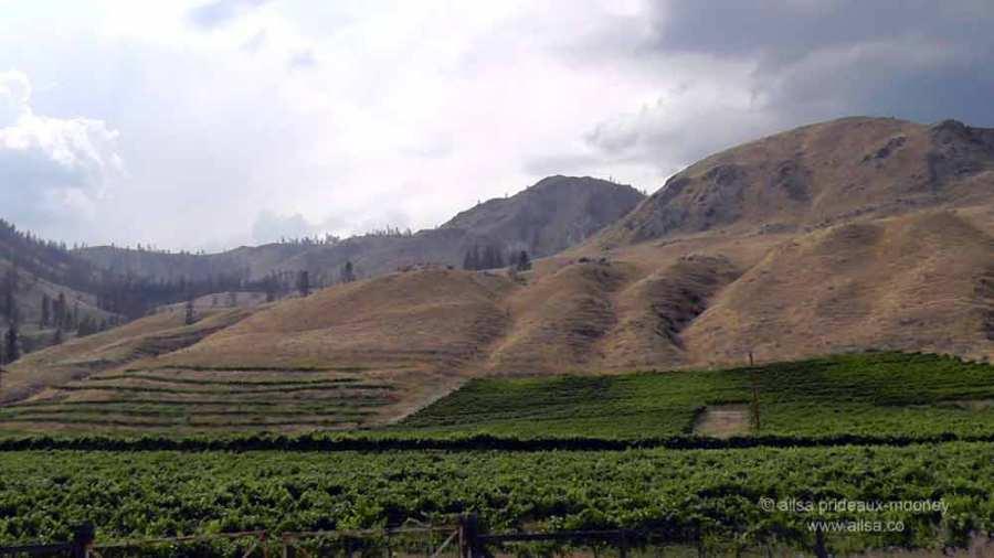methow valley, agriculture, fertile valley, north cascades loop, leavenworth, washington, Stevens Pass, travel, travelogue, Ailsa Prideaux-Mooney