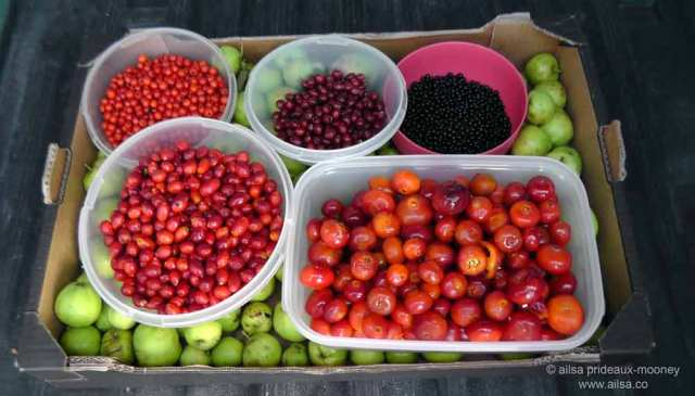 foraging, wild food, wild fruit, berries, ireland, hedgerow, autumn, travel, travelogue, ailsa prideaux-mooney
