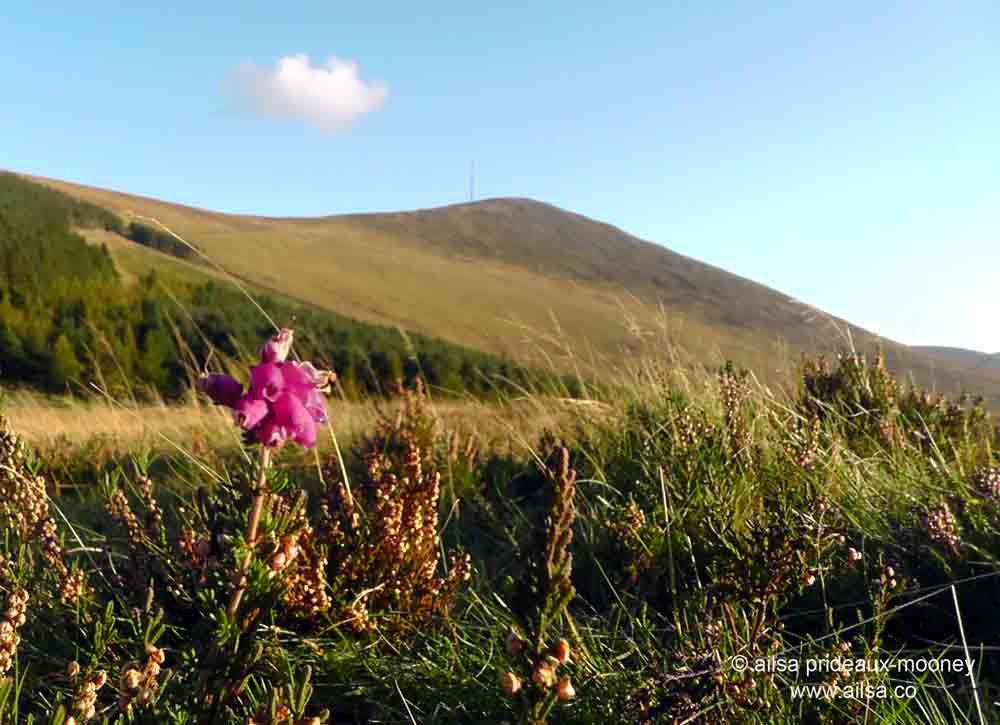 Mount Leinster and the Nine Stones