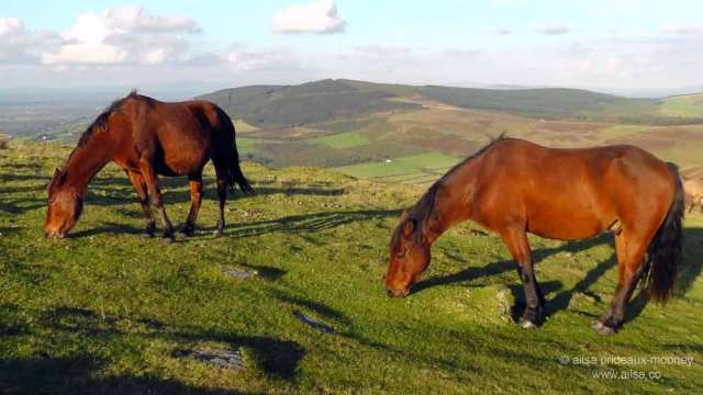 mount leinster, carlow, ireland, nine stones viewing point, travel, travelogue, ireland, wild horses