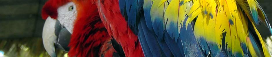 travel, travelogue, parrots, guatemala, antigua, ailsa prideaux-mooney