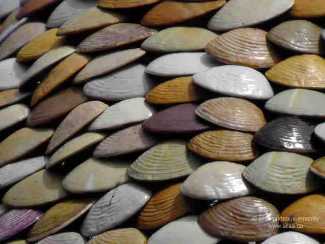 clam tree, witness trees, ballard, seattle, travel, travelogue, ailsa prideaux-mooney