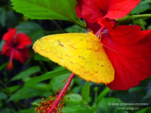 tikal, guatemala, jungle butterfly, travel, travelogue, ailsa prideaux-mooney