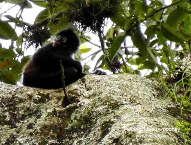 spider monkey, tikal, guatemala, travel, travelogue, photography, ailsa prideaux-mooney