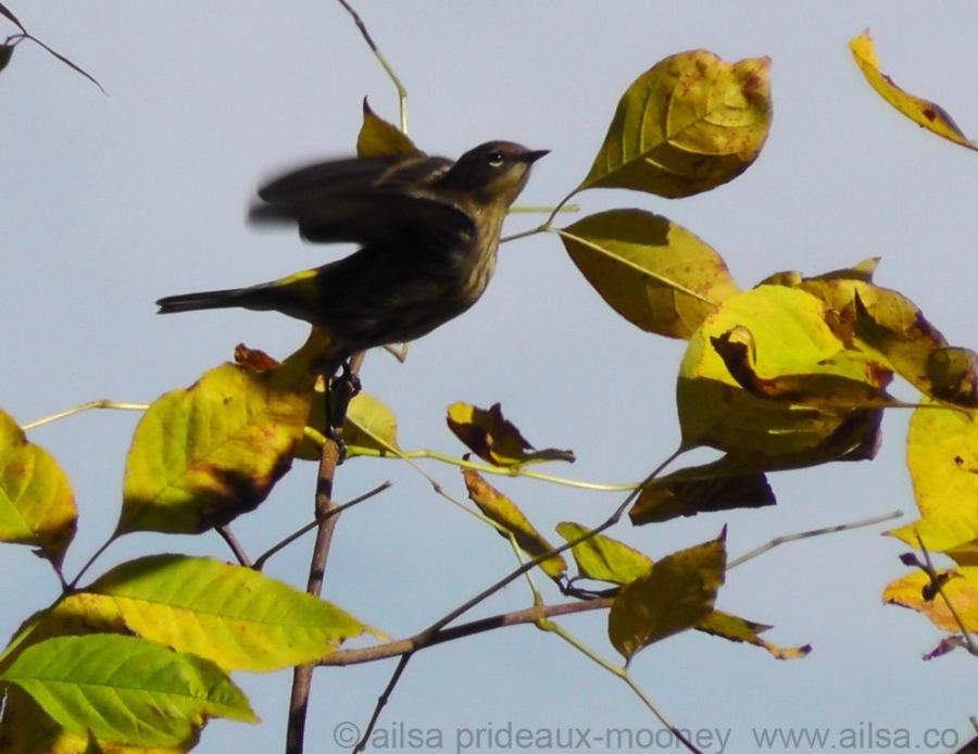 bird photography, flight, new york, travel, travelogue, ailsa prideaux-mooney