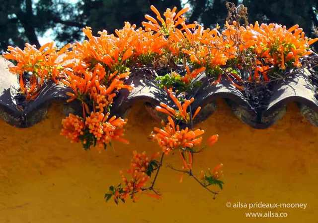 antigua, guatemala, flowers, architecture, travel, travelogue, ailsa prideaux-mooney