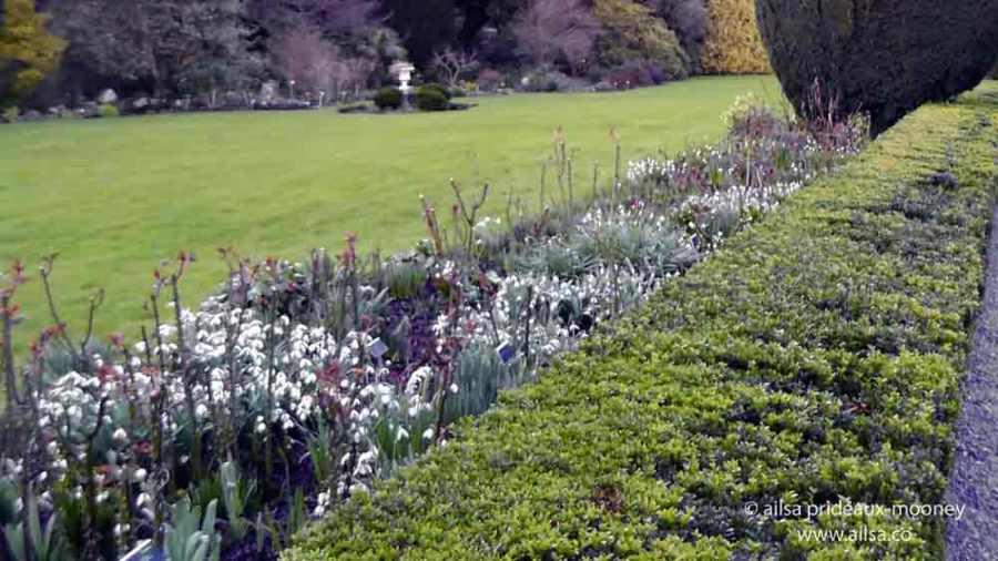 altamont gardens, snowdrop festival, ireland, travel, travelogue, ailsa prideaux-mooney