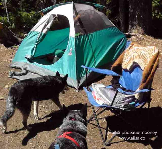 dogs camping, salmon le sac, traveloogue, travel, ailsa prideaux-mooney
