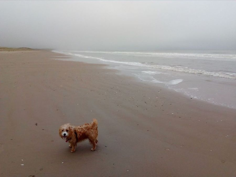 dog, beach, ireland, travel, travelogue, ailsa prideaux-mooney