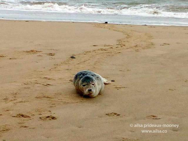 seal, ireland, wexford, travel, travelogue, ailsa prideaux-mooney