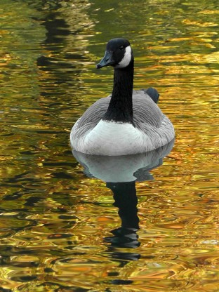 van cortland park, wildlife, new york, travel, travelogue, ailsa prideaux-mooney