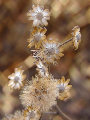 seed head, battery park, new york, piet oudolf, ailsa prideaux-mooney