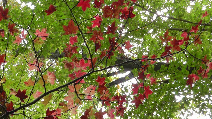 staten island, new york, ailsa prideaux-mooney, leaf peeping